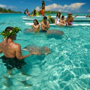 moorea-ray-feeding-in-lagoon