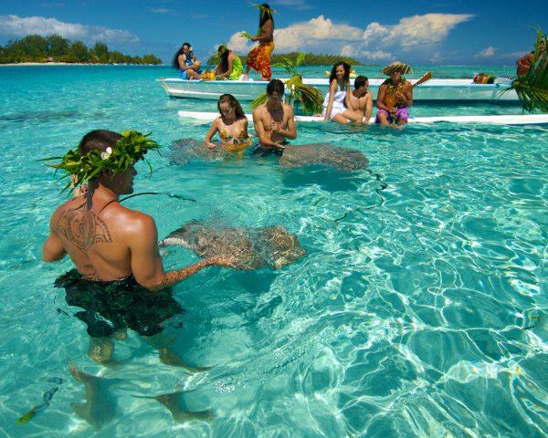 moorea-ray-feeding-in-lagoon