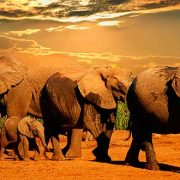 Safaris-en-Sudáfrica-7